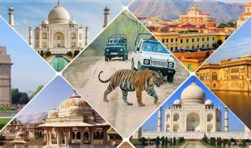 Wildlife and Taj Mahal Tour India
