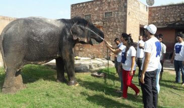 Elephant Day Activity Packages